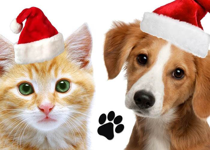 cat and dog in santa hats
